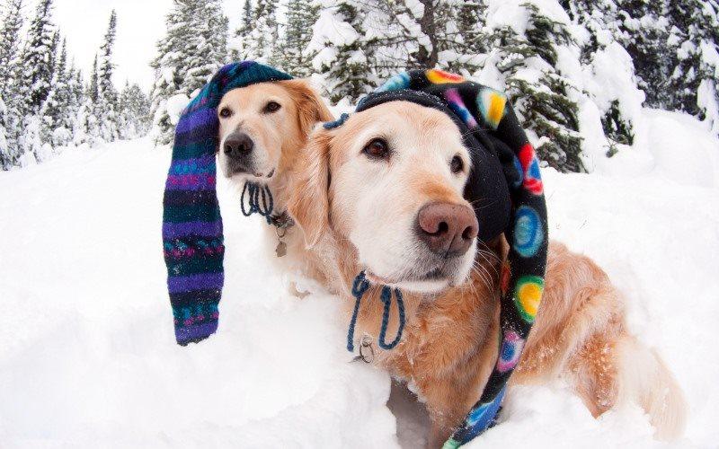 31348939 Вязаная шапка для собаки своими руками. Как связать шапку для собаки спицами и крючком. Описания с зарубежных сайтов